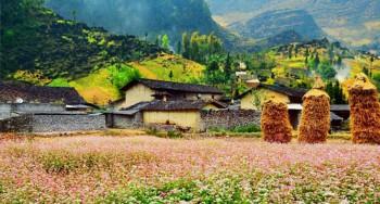 Tổng hợp kinh nghiệm du lịch Hà Giang mùa tam giác mạch